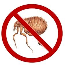 No Fleas!