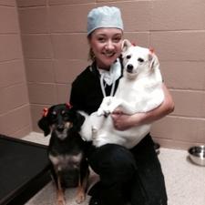 small animal veterinarian
