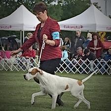 Patricia haines veterinarian pointers