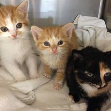 adoptable pets humane work