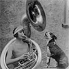 Barks and Brass
