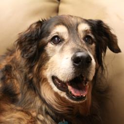 senior pets,senior care
