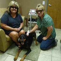 Companion Animal Therapy,laser therapy