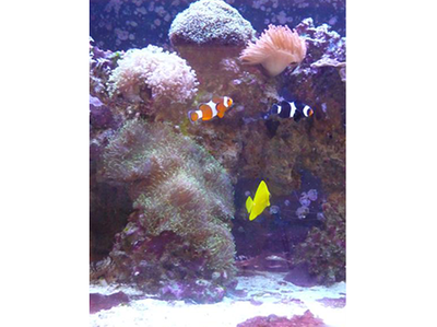 Salt Water Aquarium