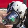 pet oxygen masks