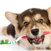 Dog with tooth brush