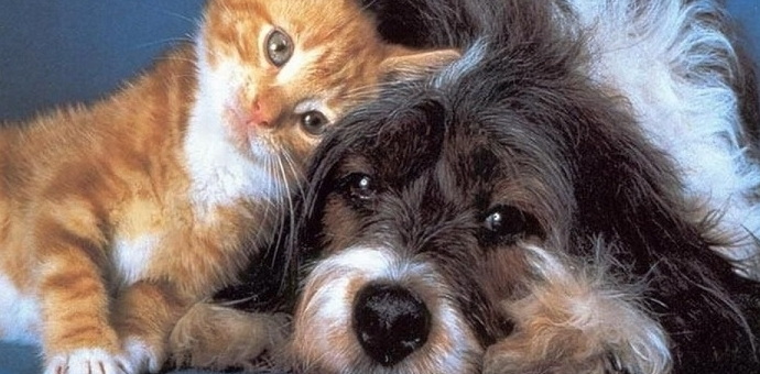 dog and cat home page