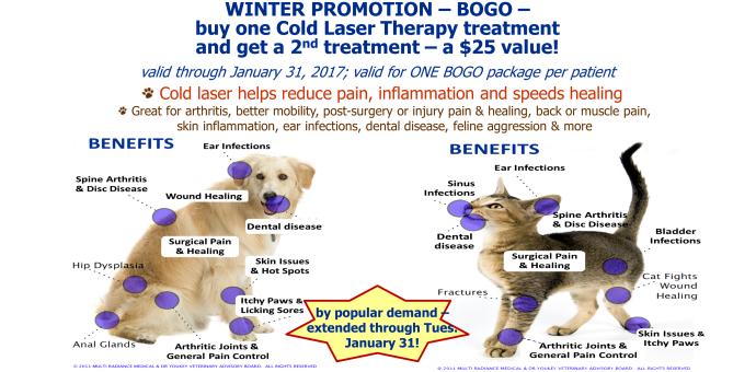 senior,cold laser,promo,discount,coupon,special