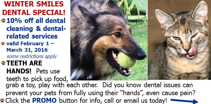 dental,promo,special,discount,teeth,petdental
