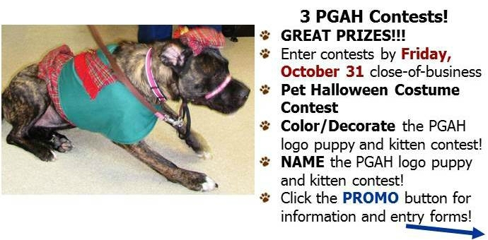 contest,costume,pet,dog,cat,halloween,color,name