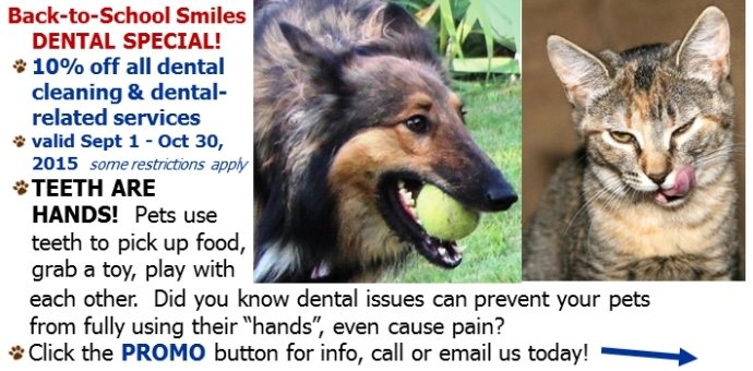 dental,dog,cat,promo,special,coupon,discount,teeth