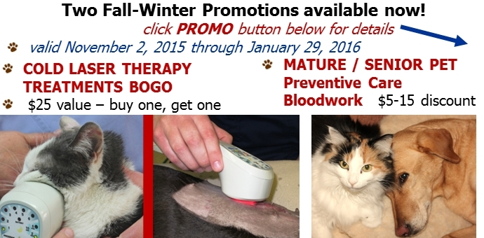 senior,bloodwork,cold laser,promo,discount,coupon