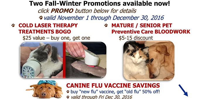 senior,bloodwork,cold laser,promo,discount,coupon
