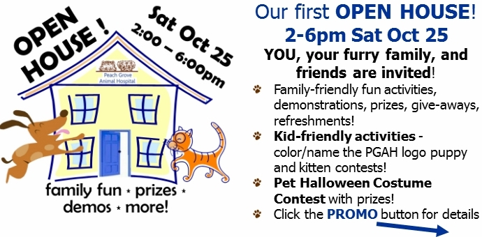 open house,event,fun,family,pets,halloween,pet fun