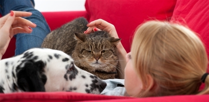 girl on couch with dog and cat