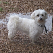Puddles Danger Dallas Vet Clinic Rain