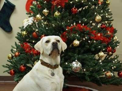 Home for the Holidays Canine Country Club 2015