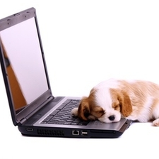 puppy on a computer