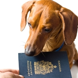 dog looking at a passport