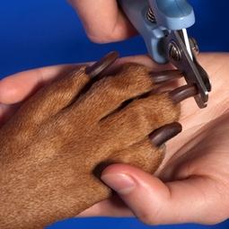 nail trim