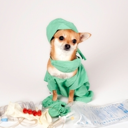 surgery dog