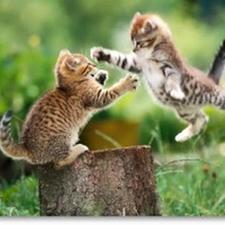 kittens jumping