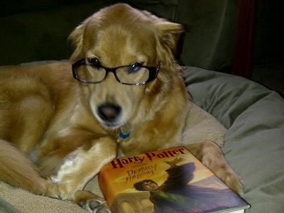 Smarter Than The Average Dog