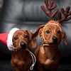 dog weiner christmas dachshund