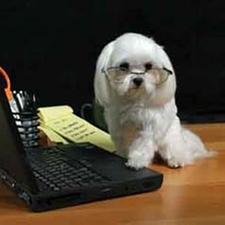 vet,veterinary hospital, puppy, animal hospital