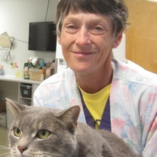 dr robin whitney, cat, dog, vet, hospital