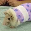 rat body cast