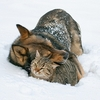 Winter weather dog and cat