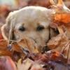 dog,fall,rvh