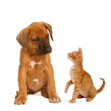How to clean your pet's ears