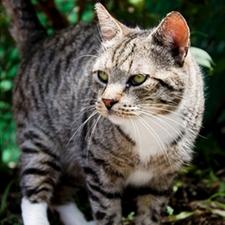 veterinarian, soah, cat, cute, eli