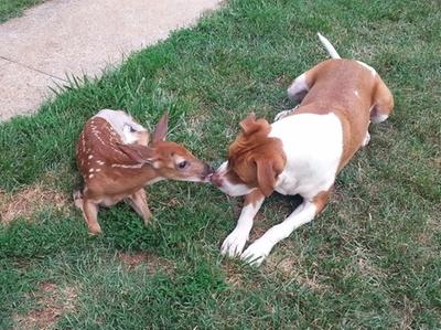 Baby Deer Recovery