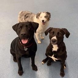 Dog training at Lake Forest Animal Hospital