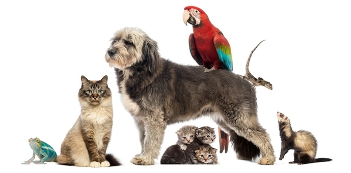 home   dog cat amp bird clinic of nutley