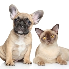 taking care of your dog's and cat's ears