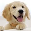 puppy, dog, vet, roanoke, va, 24018