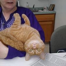 Rafiki resident kitty