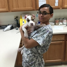 Glory veterinary assistant