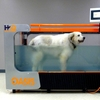 Underwater Treadmill at Sears Animal Hospital