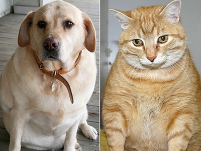 Signs of Overweight Pets