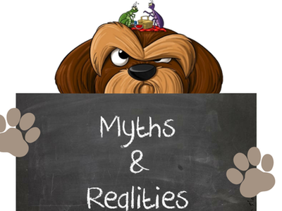 Common Myths about Fleas