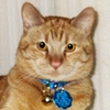 Dewey July 2015 Pet of the Month