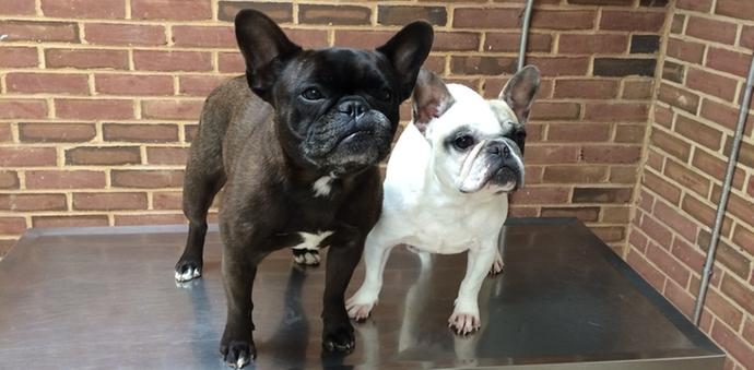 Elsie & Minnie Front Page