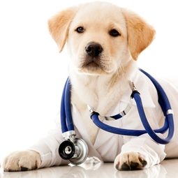 Veterinary dog cat