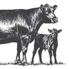 Cattle meeting