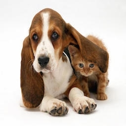 Puppy Kitten Denbigh Veterinarian Newport News